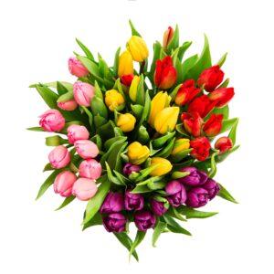 Tulipaner i mange farver
